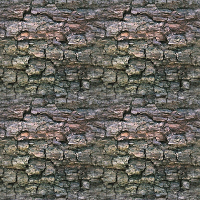 Tree Bark Seamless Texture #122