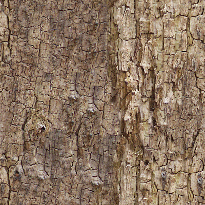 Tree Bark Seamless Texture #98
