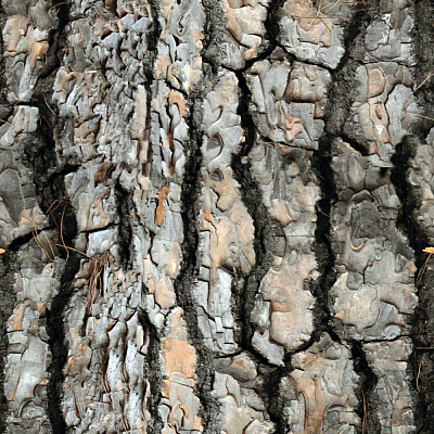 Tree Bark Seamless Texture #99