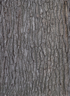 Tree Bark Seamless Texture #6781
