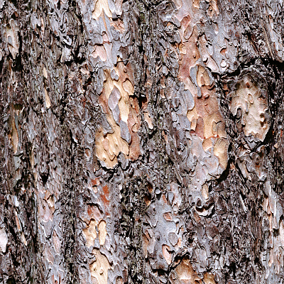 Tree Bark Seamless Texture #76