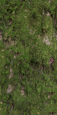 Tree Bark Seamless Texture #6796